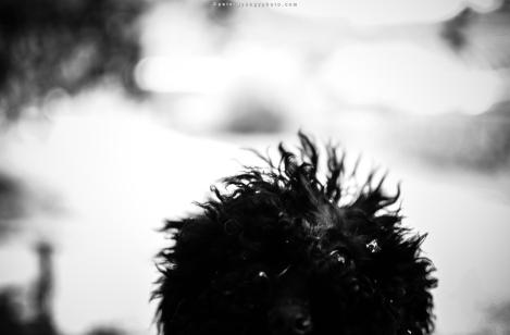blackbrush